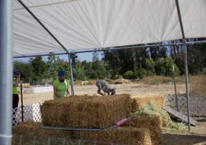 Up Coming Barn Hunt Etc.; Events